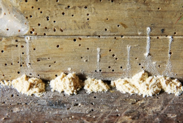 Woodworm Treatment spray can eliminate damage