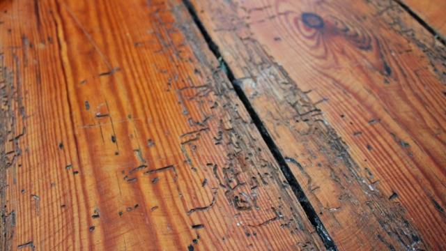 woodworm damage on floorboards
